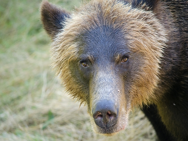 BC Outdoor Adventure - fishing, whales, bears, eco tours and more